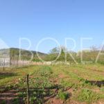 04_Duino-Aurisina_casale_carsico_in_pietra_con_vigna