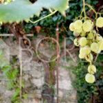 03_Duino Aurisina_casa_carsica_con_corte