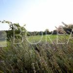 16_duino-aurisina-casa-con-giardino