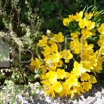 04_Duino_aurisina_casa_in_vendita_con_giardino