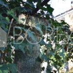 09_Duino-Aurisina_vendita-appartamento-con-giardino