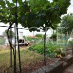 02_Duino_Aurisina_casa_con_giardino_orto