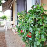 16_Duino_Aurisina_casa_con_giardino_facciata