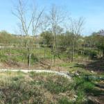 Terreno edificabile Sistiana